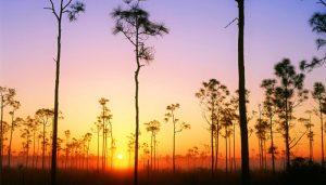 Everglades-National-Park_top